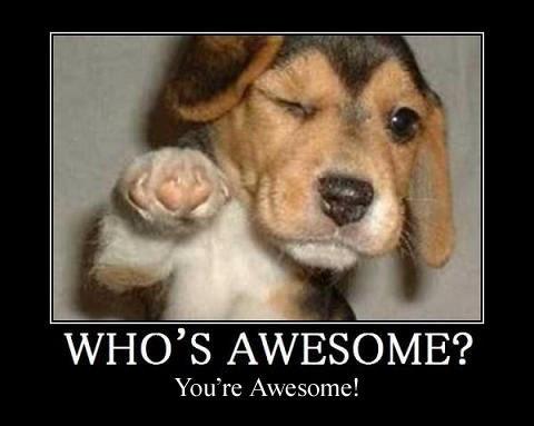 awesome-blink-cute-dog-great-favim-com-140133